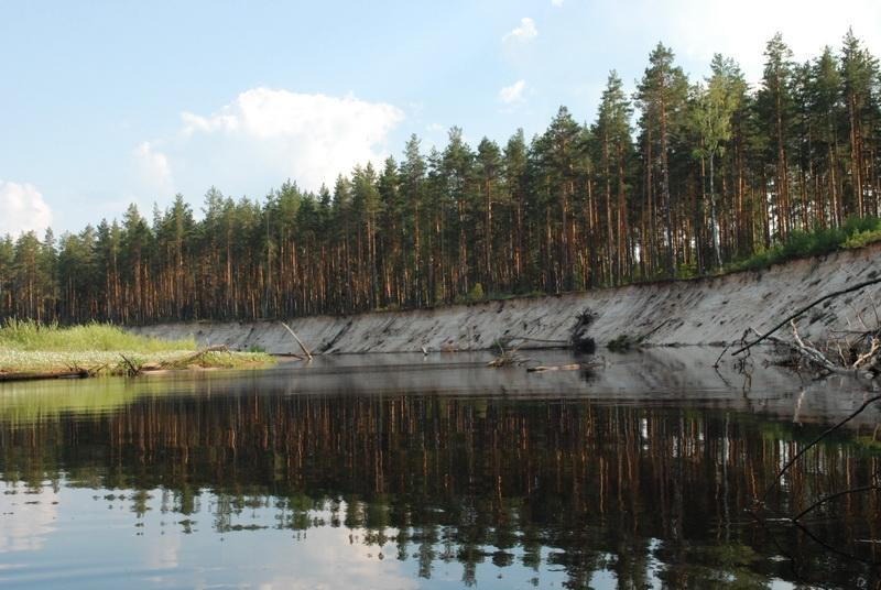 Керженский заповедник приглашает на экологическую акцию «Чистый ...   536x800